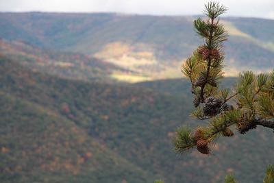 Pine Branch; Seneca Rocks 2014