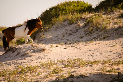 King of the Dunes; Assateague 2014