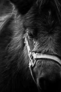 Dark Mini; Burton Hobby Farm