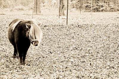 Ke$ha; Burton Hobby Farm