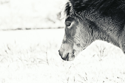 Mindful Foal; Assateague 2014
