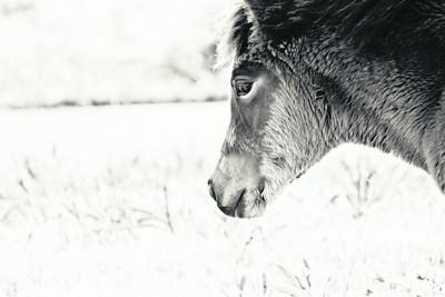 Mindful Foal; Assateague 2014