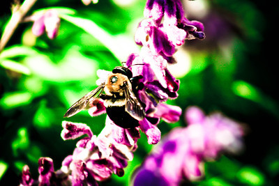 Purple Bee