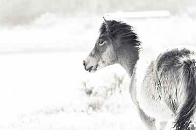 Mindful Foal