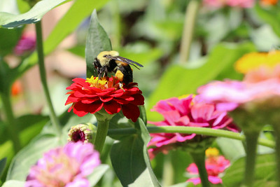 Pollen Worker