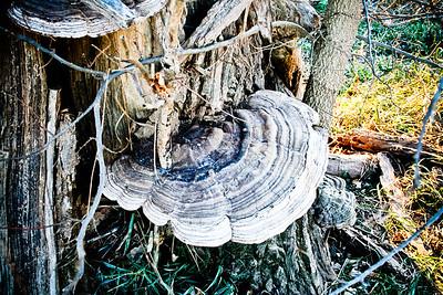 Mushroom Shelf