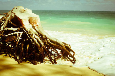 Beach Stump; Hawaii 2012