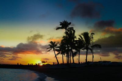 Palm trees; Hawaii 2012