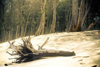 Fallen Tree; Hawaii 2012