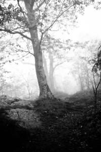 Shadow trail; Old Rag 2012