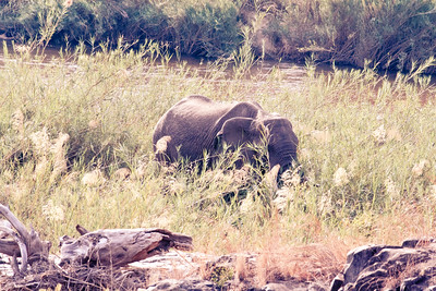 River Grazing; Kruger National Park South Africa 2014