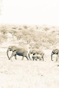 Family March; Kruger National Park 2014