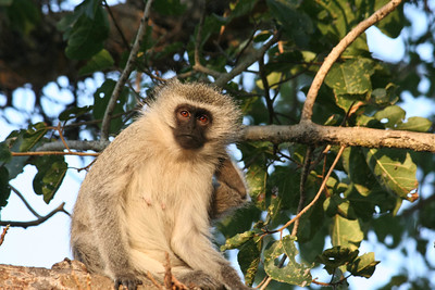 Watching You; Kruger National Park South Africa 2014