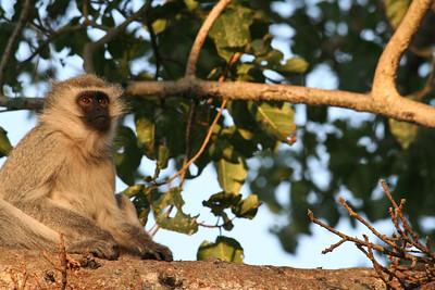 Lookout; Kruger National Park South Africa 2014