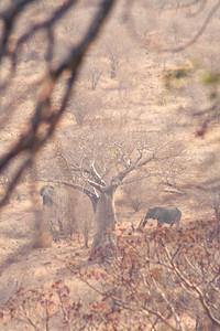 Under the Boab tree; Kruger National Park 2014