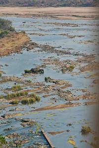 Elephants in the River; Kruger National Park 2014