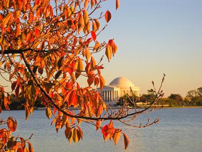 Tidal Basin Cherry Tree in Fall; 2012