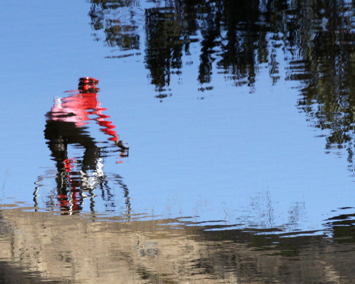 Water reflection of a cyclist at Rose Creek, San Diego.  8x10