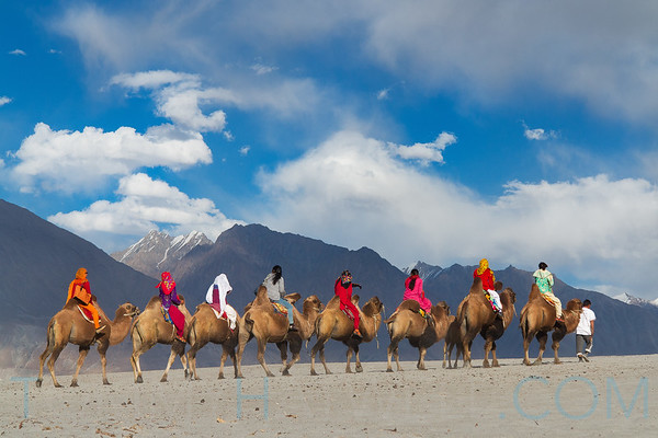 20150827_Hatwell_Nubra_Valley00254