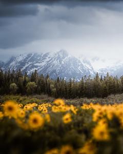 Springtime in the Tetons