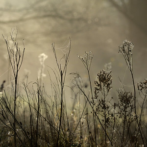 mist_17713