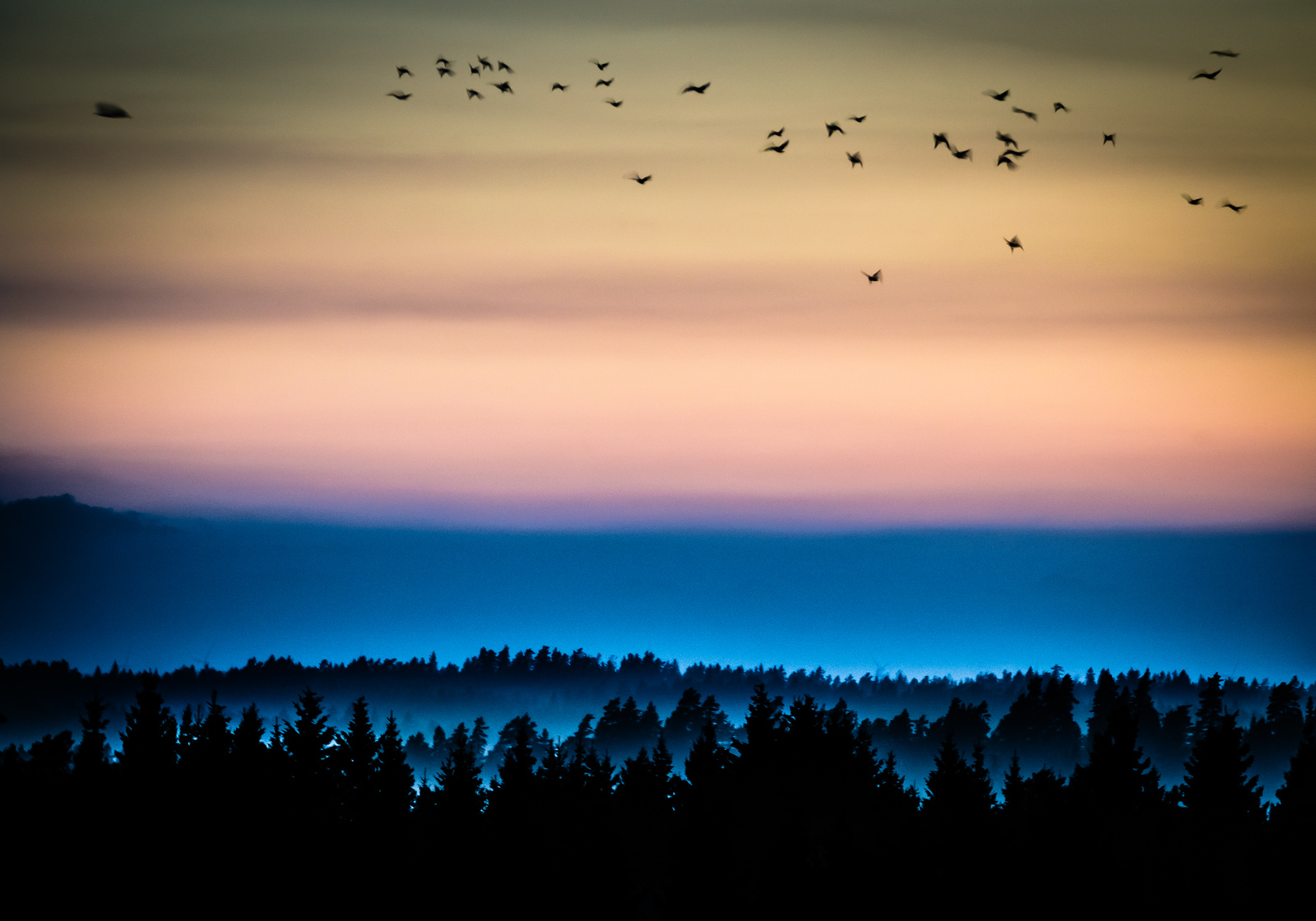 Taken with a telephoto lens over the forrest of Farsbo, Sweden after sunset.