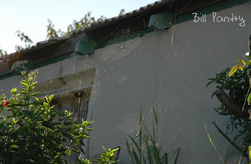spider webs, Warwick
