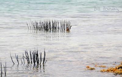extreme low tide, Granaway Deep