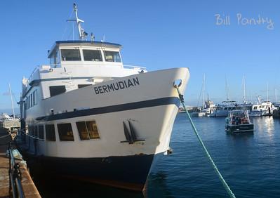 The Bermudian
