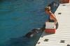 Dolphin Show at the Bermuda Maritime Museum, Dockyard, Sandy's, Bermuda