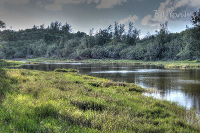 Spital Pond Nature Reserve, Smith's, Bermuda