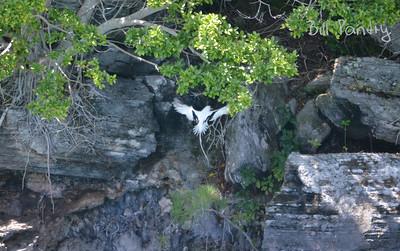 Longtail, Harrington Sound, Hamilton Parish, Bermuda