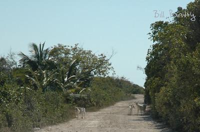 road to Chez Pierre, Long Island, Bahamas