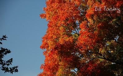 Arnold Arboretum, in Jamaica Plain, Massachusetts