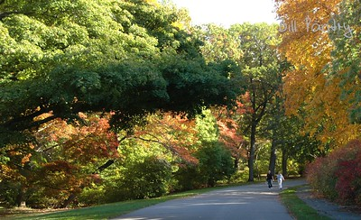 Arnold Arboretum, in Jamaica Plain, Massachusetts