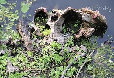 Lettuce Lake Park, Tampa