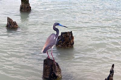 Naples Municipal Beach and Pier