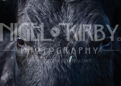 Nigel Kirby Photography