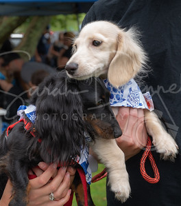 Doxie00-107