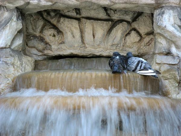 Love birds? | Rome, Italy