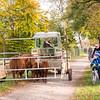 I encountered this rather strange sight on an afternoon bike ride | Augsburg, Bayern Deutschland
