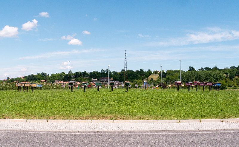 This traffic roundabout was a bee habitat! | Provincia di Cuneo, Piemonte Italy