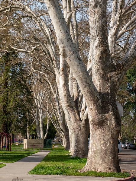 Beautiful trees at Crane Park | Turlock, Kalifornien, Vereinigte Staaten von Amerika