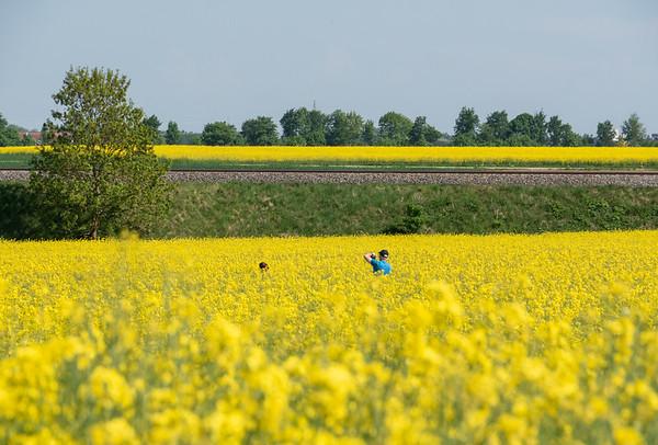 Brilliant rape-seed fields | Augsburg, Bayern, Deutschland