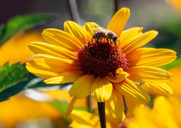 Summer in the Botanic Garden