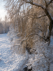 Snow in the sunshine | Augsburg, Bayern, Deutschland