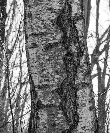 In the woods on a warm-ish winter day | Augsburg, Bayern, Deutschland