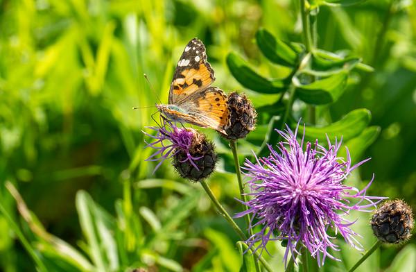 Butterfly at work | Augsburg, Bayern, Deutschland