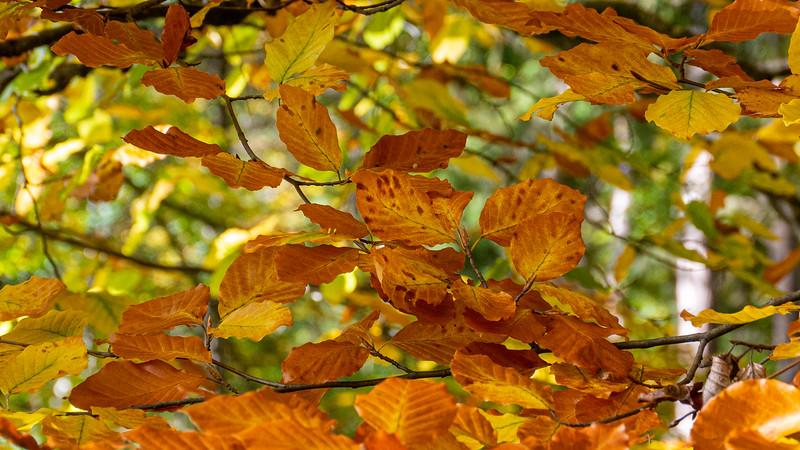 Fall in the forest | Augsburg, Bayern, Deutschland