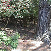 Old back yard